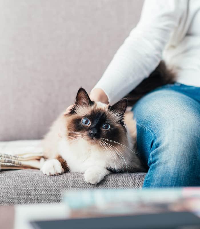 Pet Sitting Oklahoma City